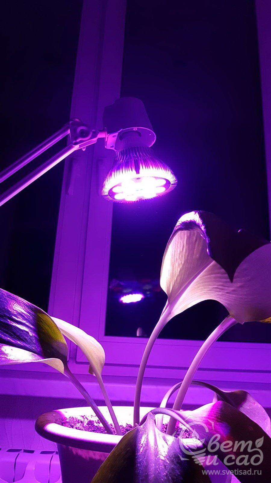 Фитолампы лампы для растений своими руками